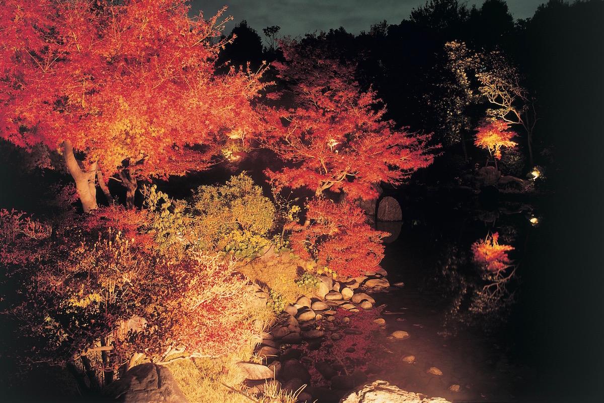 万博記念公園の紅葉ライトアップ