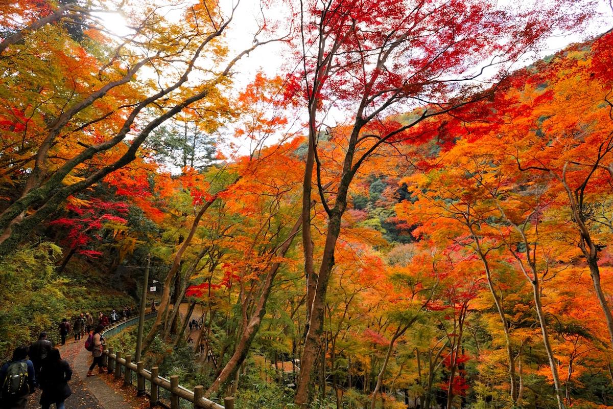 箕面公園の紅葉