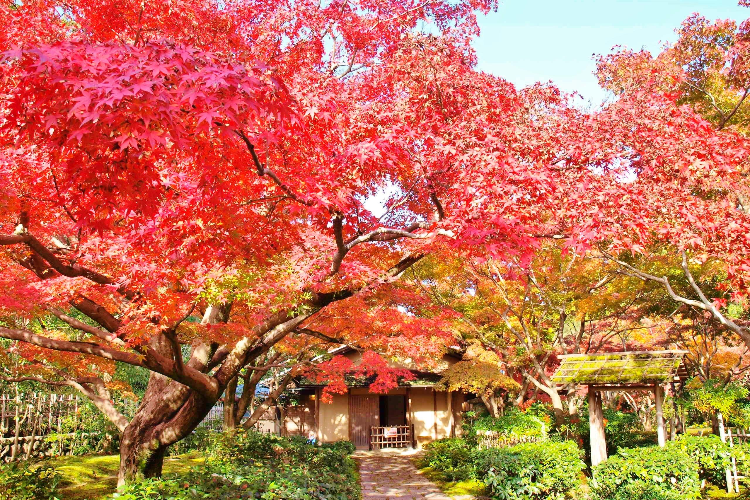 【大阪紅葉】週末に行きたい!大阪にある紅葉スポット厳選5選