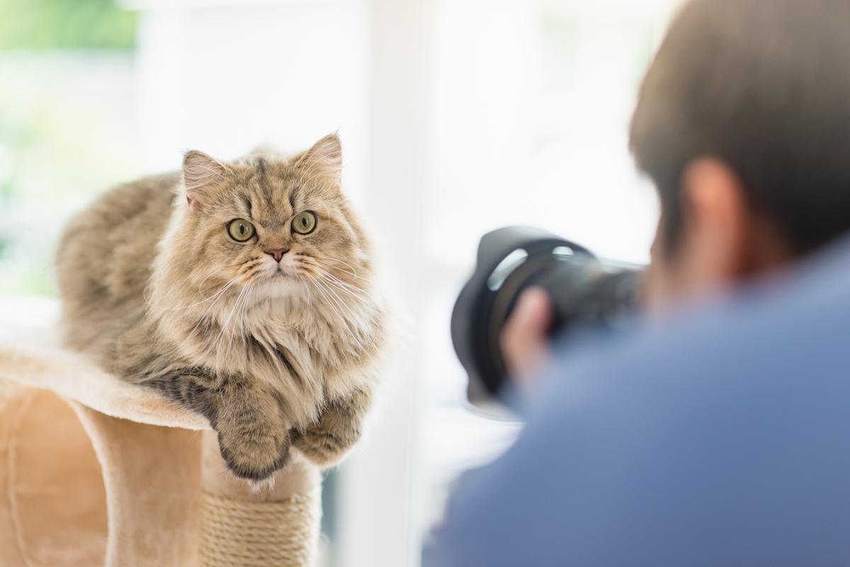 猫好きカメラマンに聞いた、猫を上手に撮影する方法