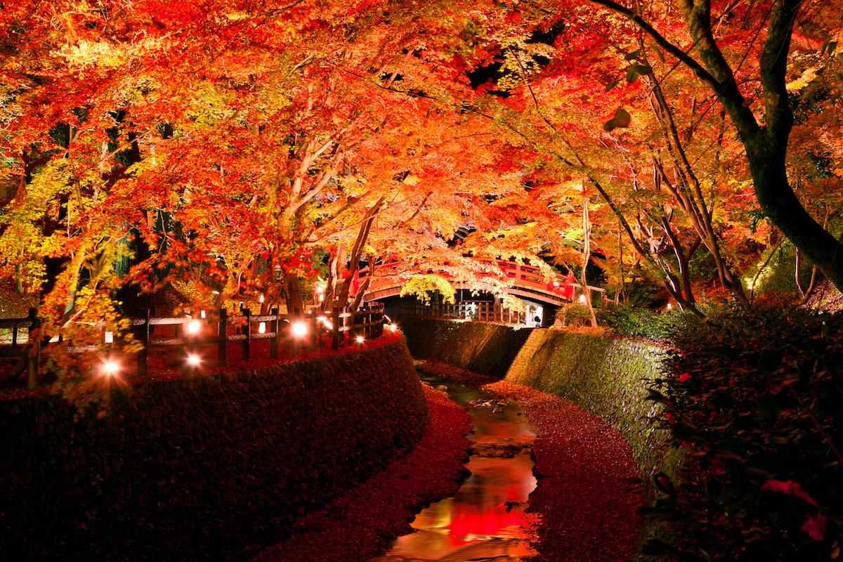 【京都紅葉】週末に行きたい!京都にある紅葉スポット厳選5選