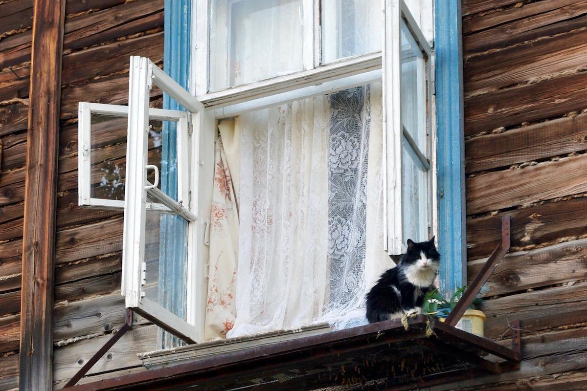 窓から逃げる猫