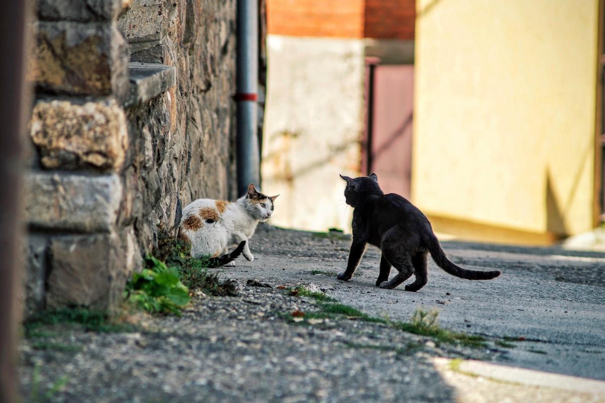 野良猫に追いかけられる猫
