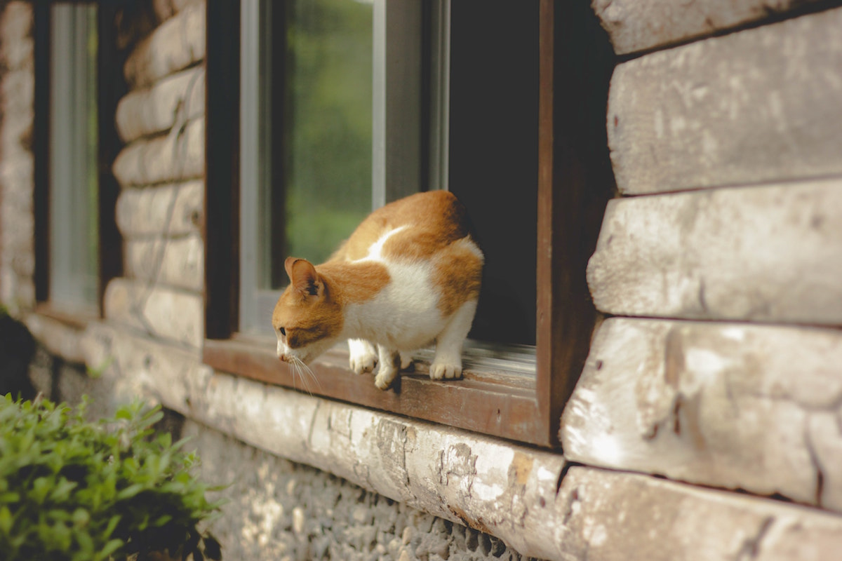 もし愛猫が脱走してしまったら?やるべきことや探すポイント