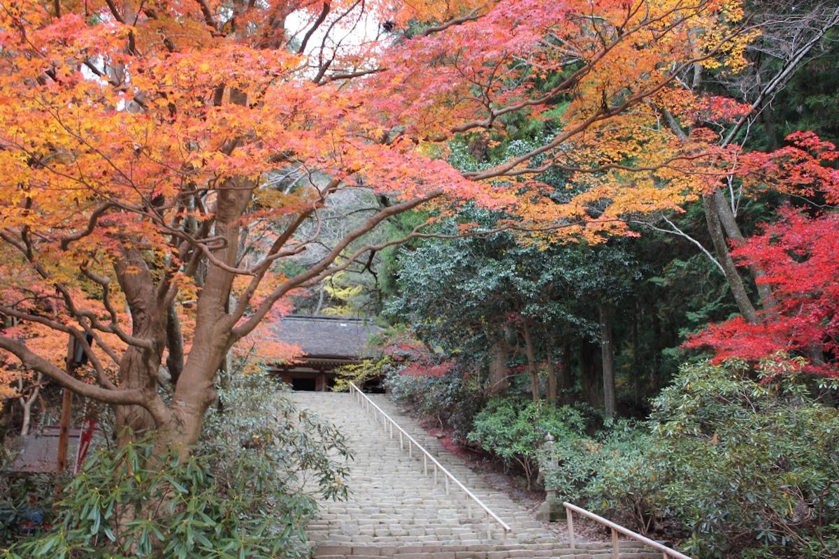室生寺の境内