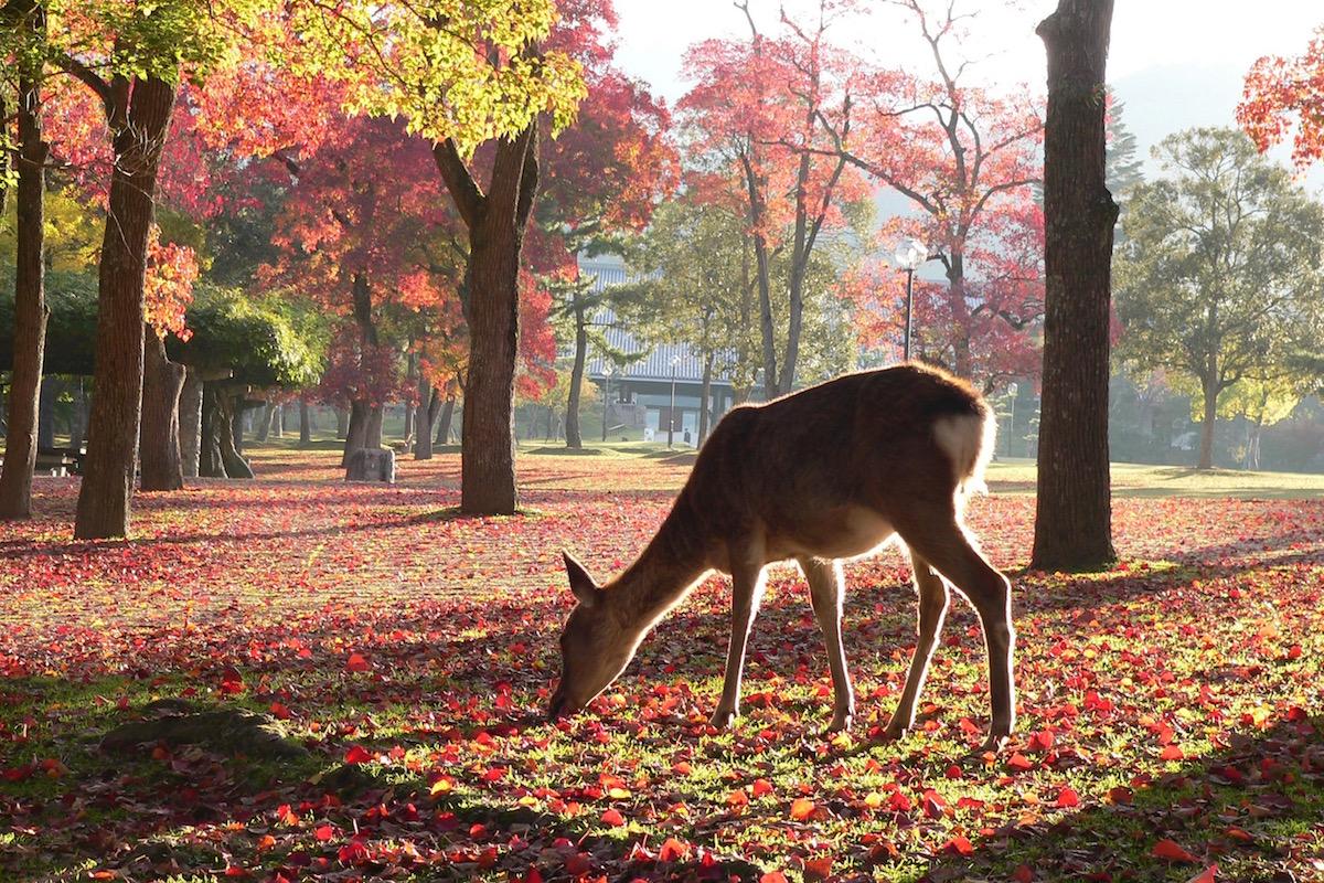 【奈良紅葉】週末に行きたい!奈良にある紅葉スポット厳選5選