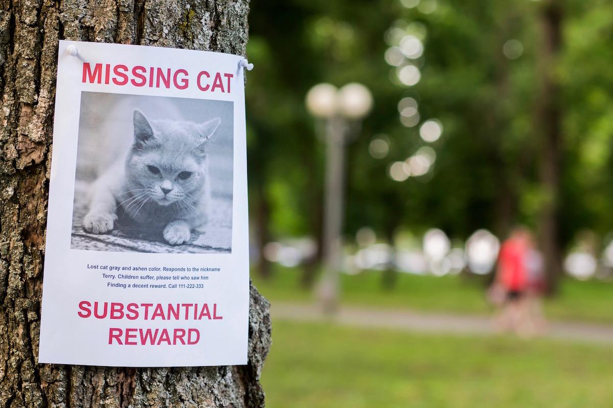 迷い猫のポスター