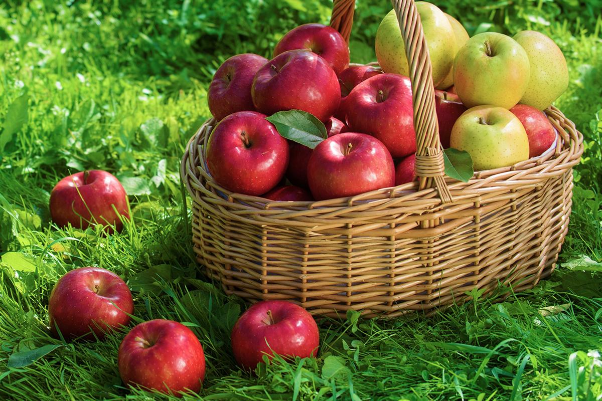 [募集終了]《30名様にプレゼント》「青森県産りんご詰め合わせ」が抽選で当たる!