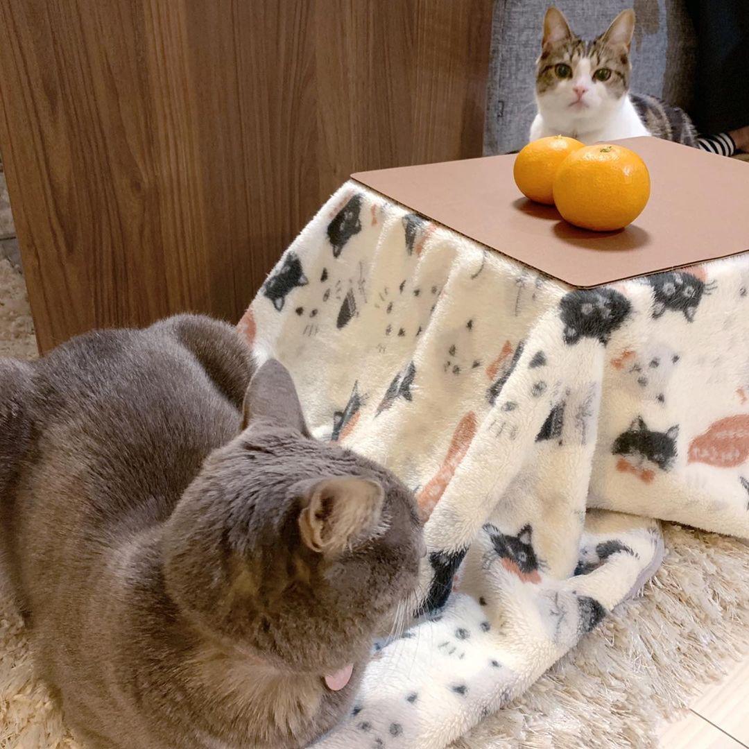 猫とこたつと思い出みかん
