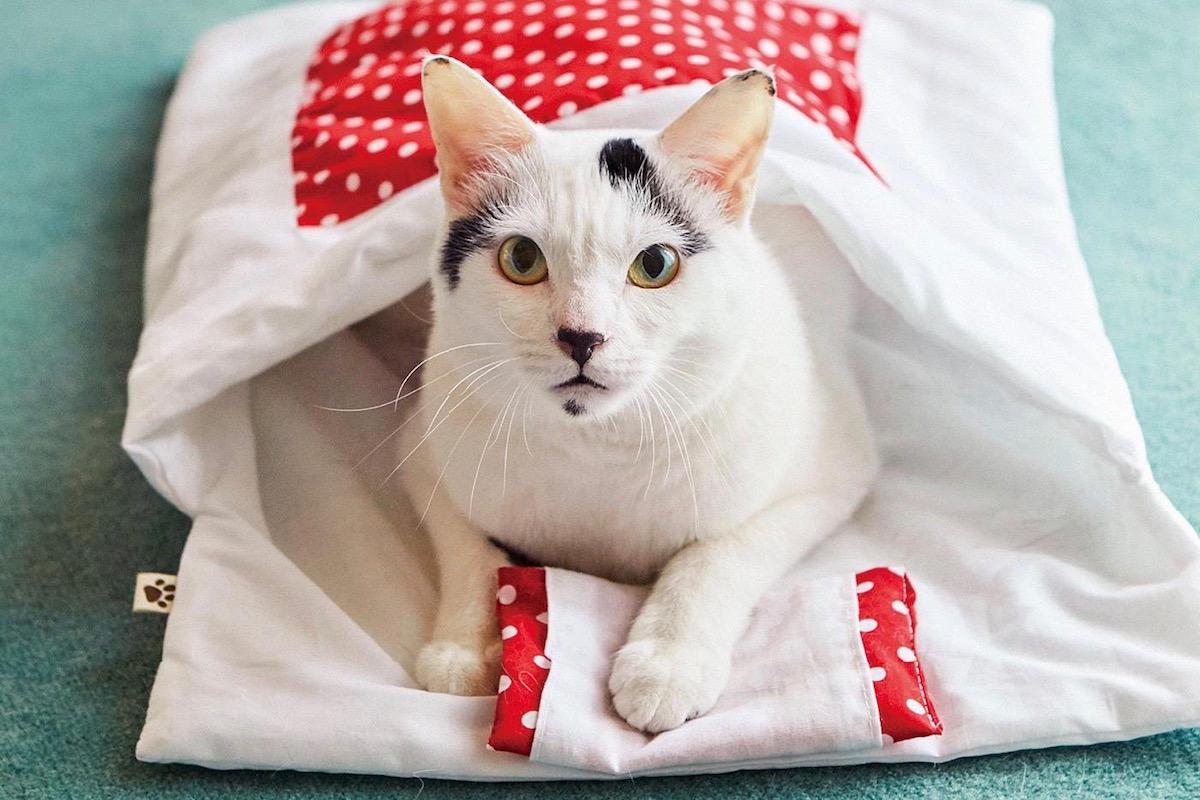 猫用和布団