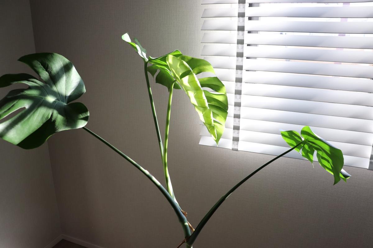 観葉植物を日光に当てる