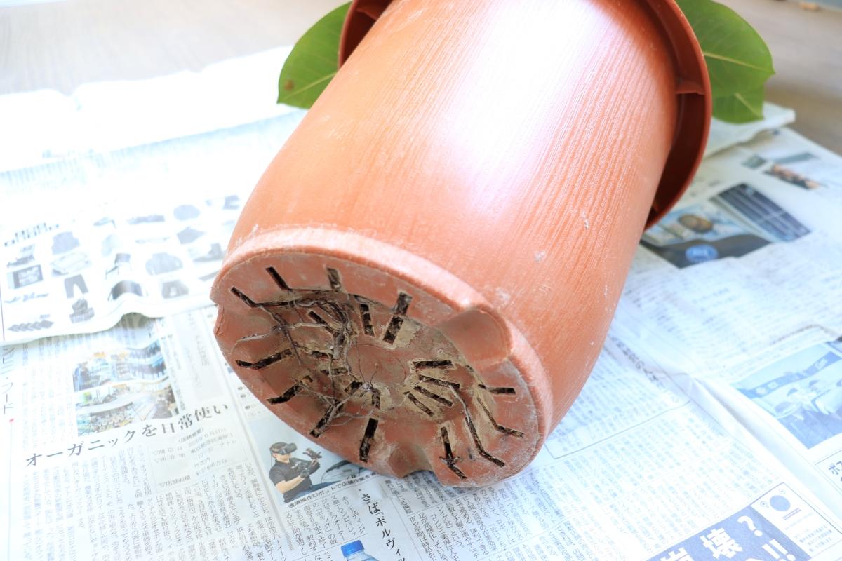 ビニールポットのままやずっと同じ鉢に植えっぱなしはNG