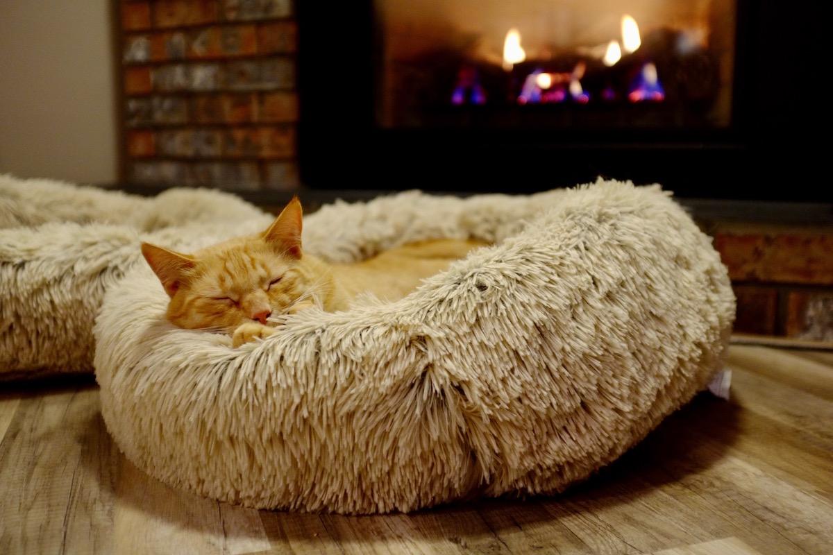 暖かい部屋にいる猫