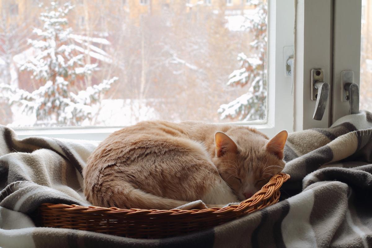 猫は本当に寒がりなの?寒い冬を猫が快適に過ごすための対策