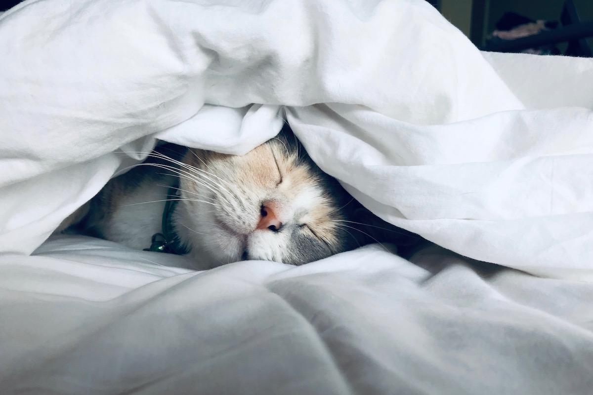 布団の中で寝る猫