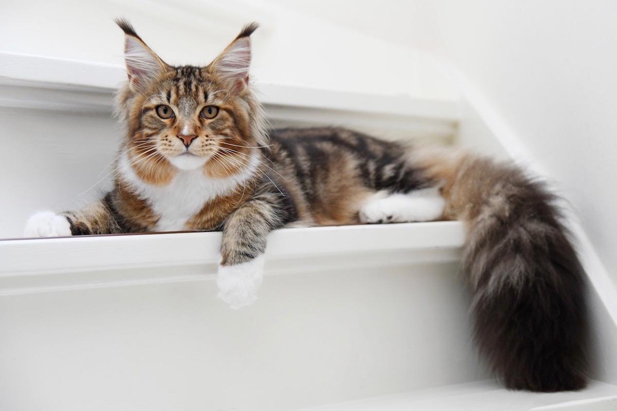 もふもふな猫