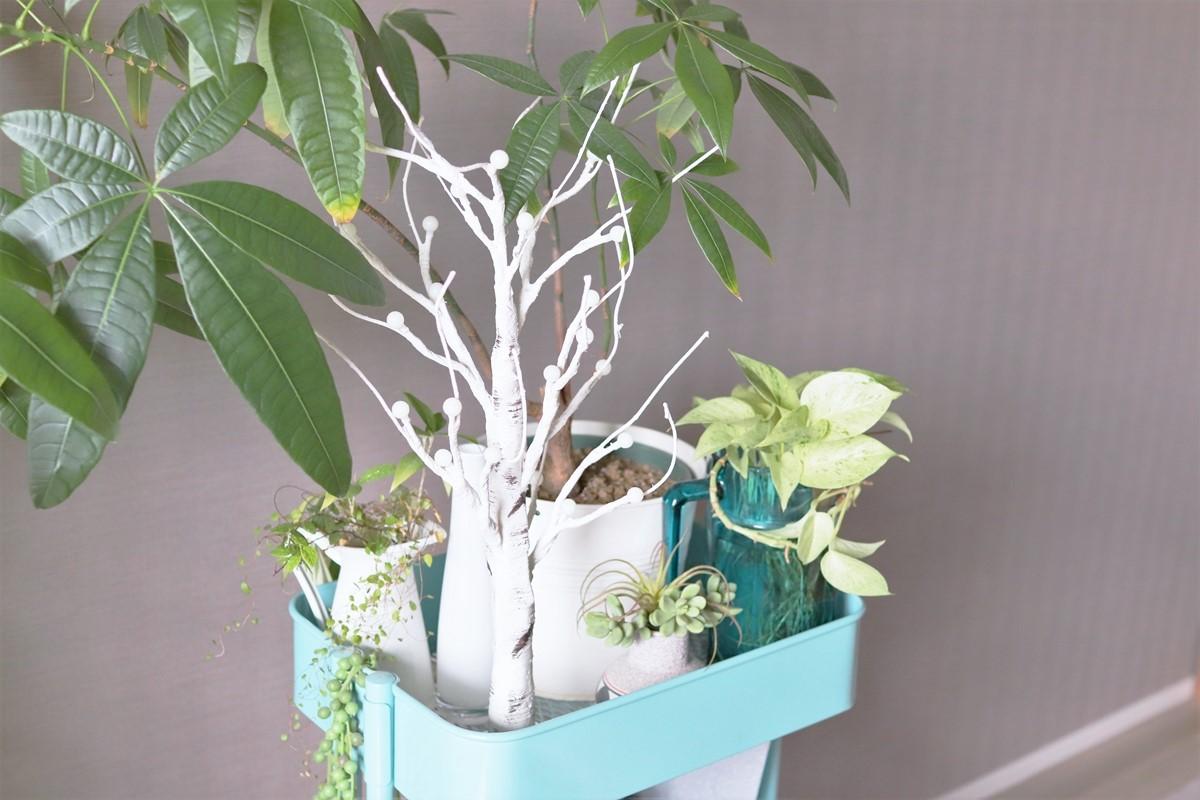 観葉植物と一緒に置く