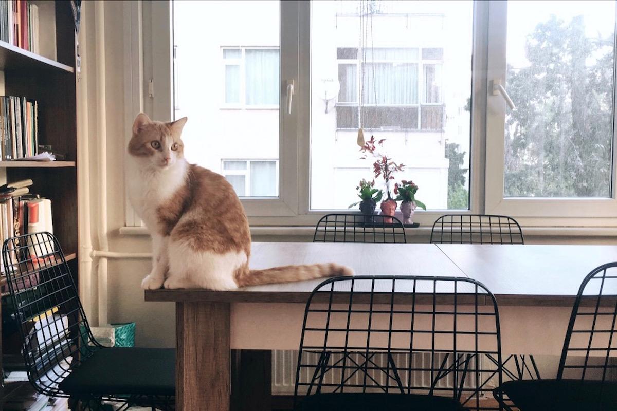 家で遊ぶ猫