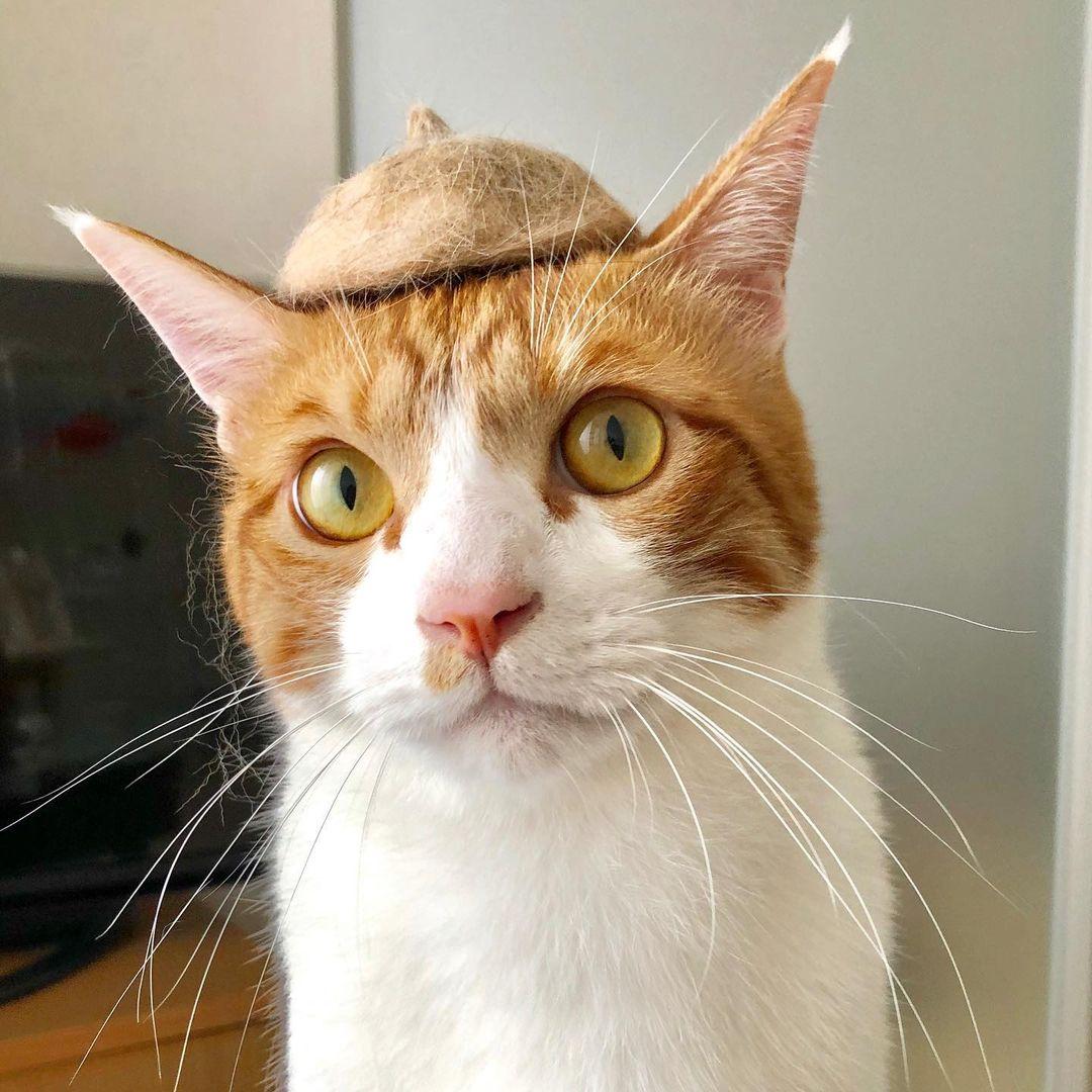 帽子 猫 の 毛