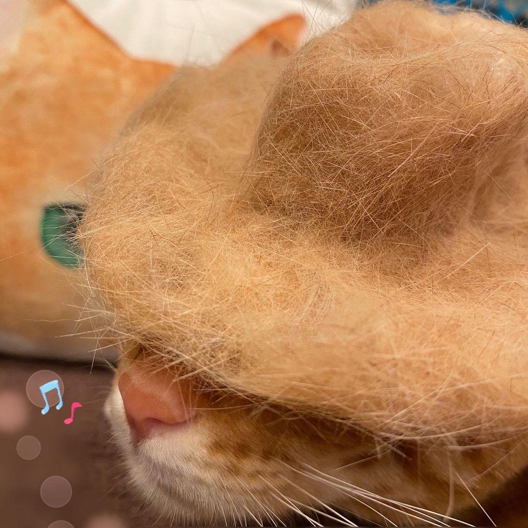 猫の帽子3