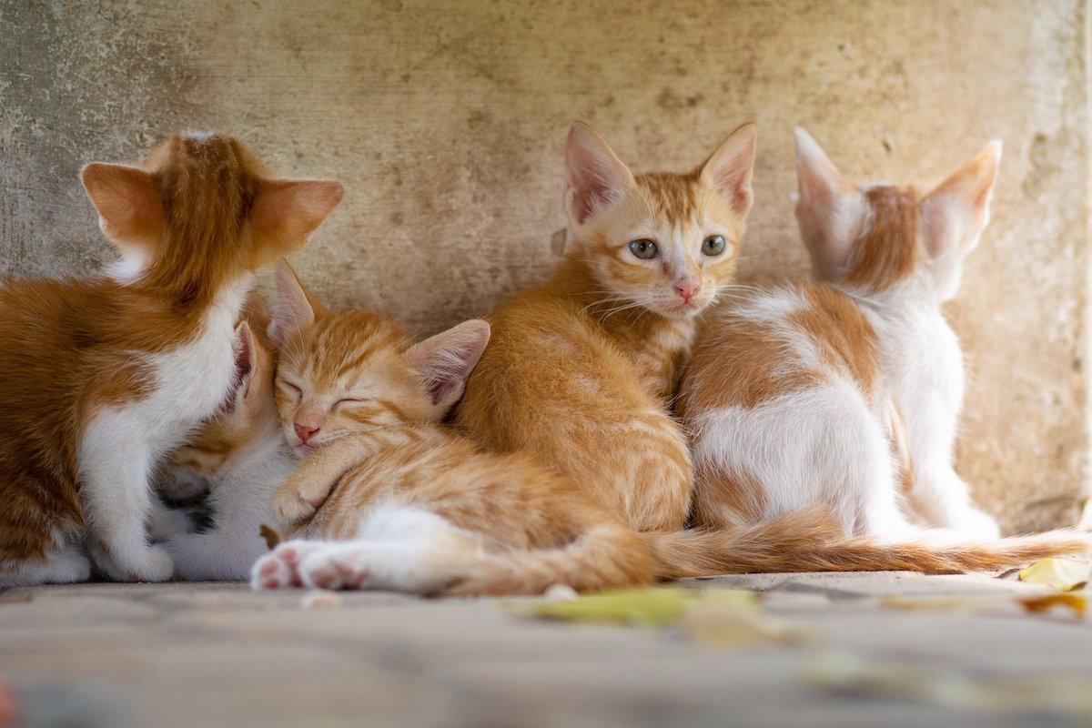 猫好き必見!肉球・しっぽ・ヒゲ袋……猫ちゃんの部位を徹底解剖!