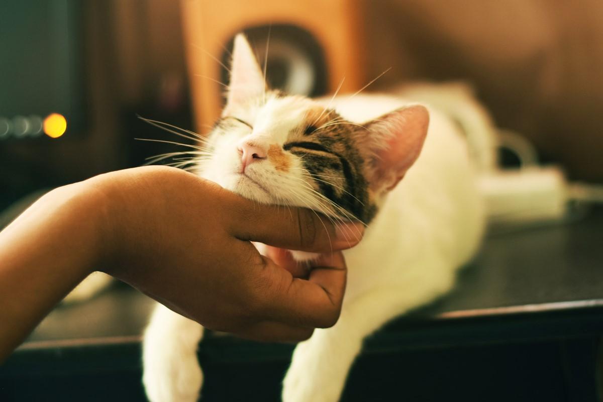 愛するペットとの生活にペット保険を