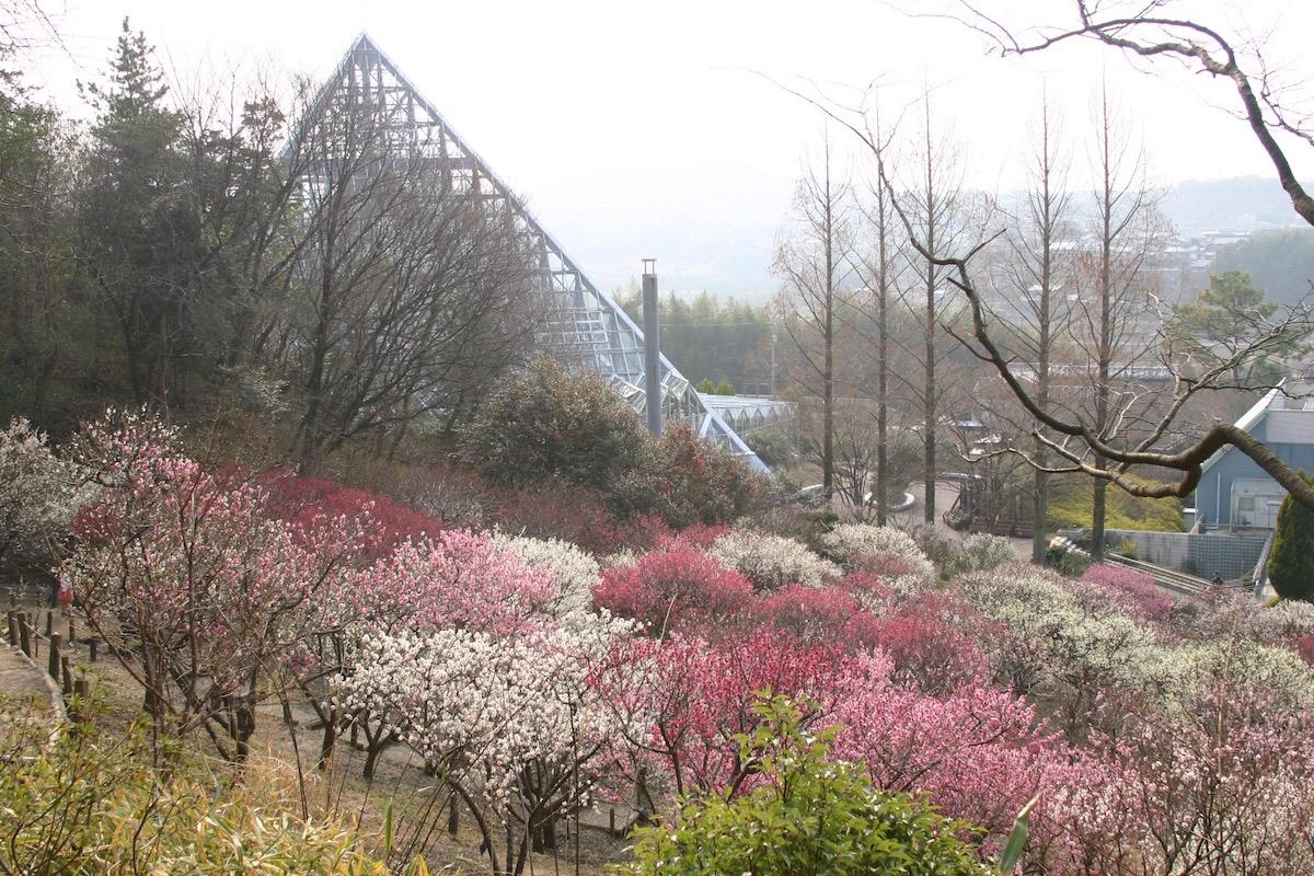 大阪府立花の文化園