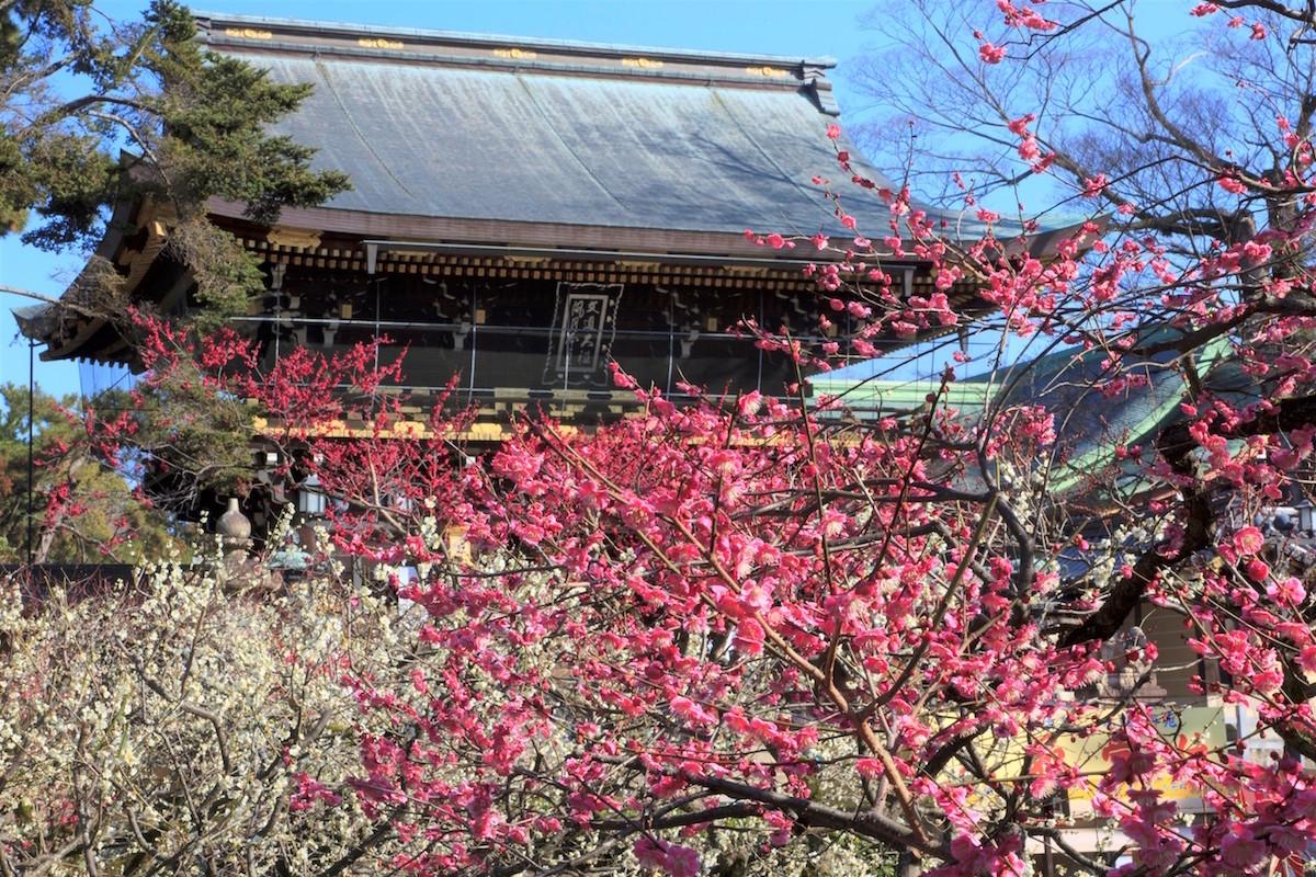 【関西・梅の名所】梅の花を楽しめる厳選スポット5選