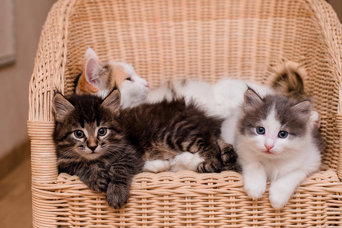 猫の毛色で性格がわかる!黒猫・キジトラ・ミケなど色柄による性格の違い