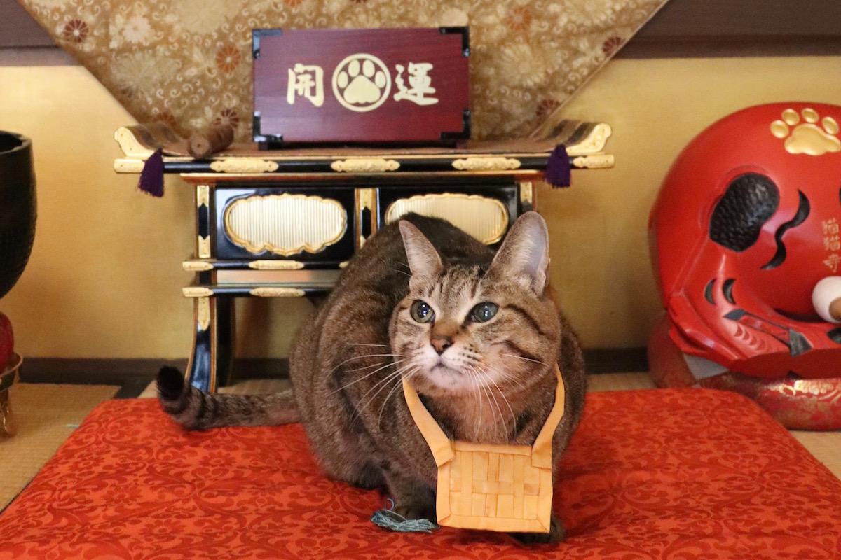 猫猫寺の住職猫