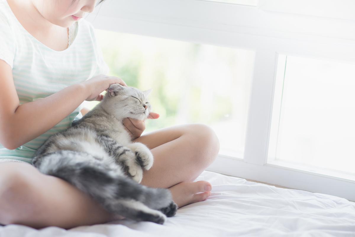 猫と遊ぶ子供