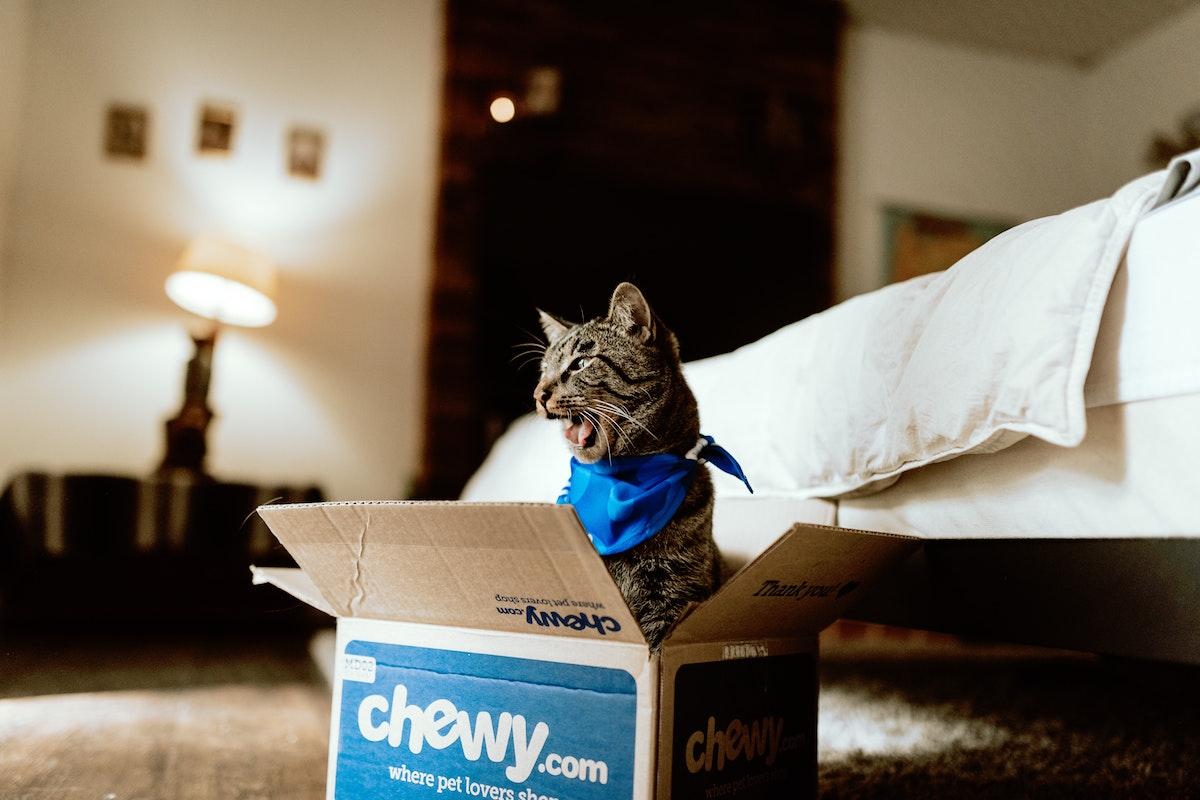 留守番をしている猫
