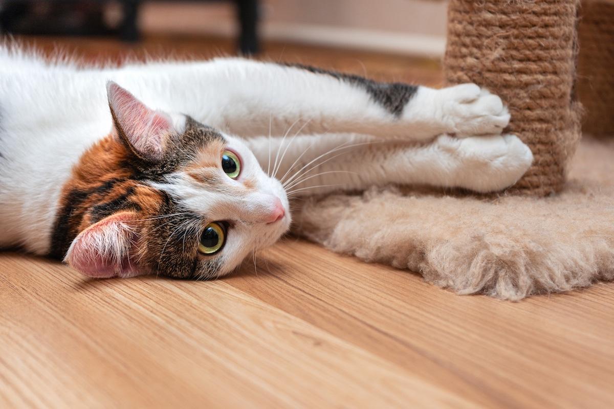 猫を飼うのにかかる費用と最初に必要なもの7つ