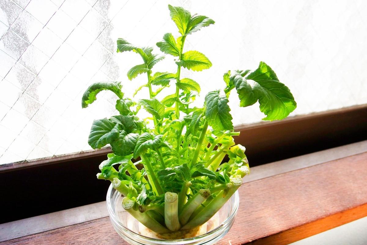 再生野菜「リボベジ」とは?人参やネギなどを上手に育ててエコ活を!