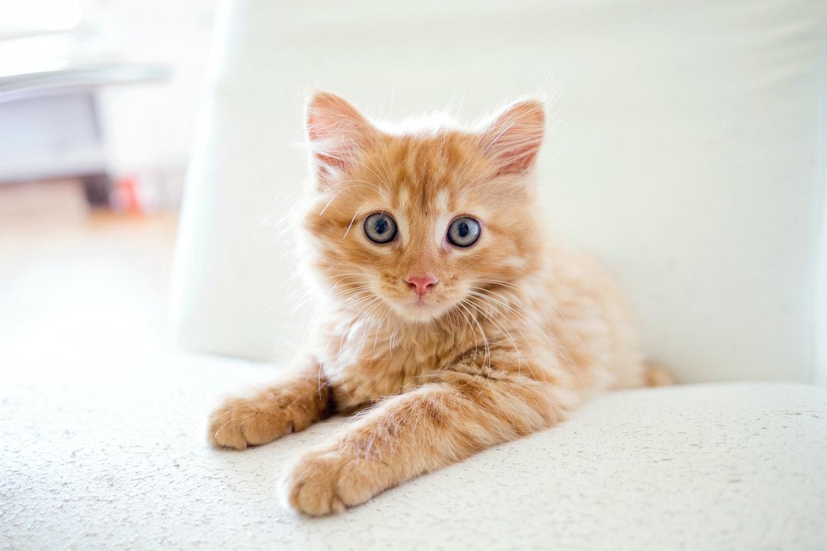 【猫の豆知識】鳴き声やヒゲの向きで気持ちがわかる?知っておきたい10の猫雑学