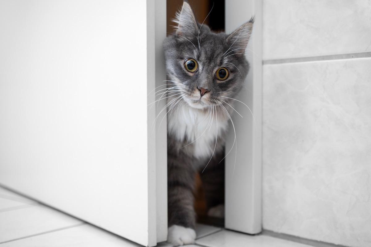 隙間を通る猫