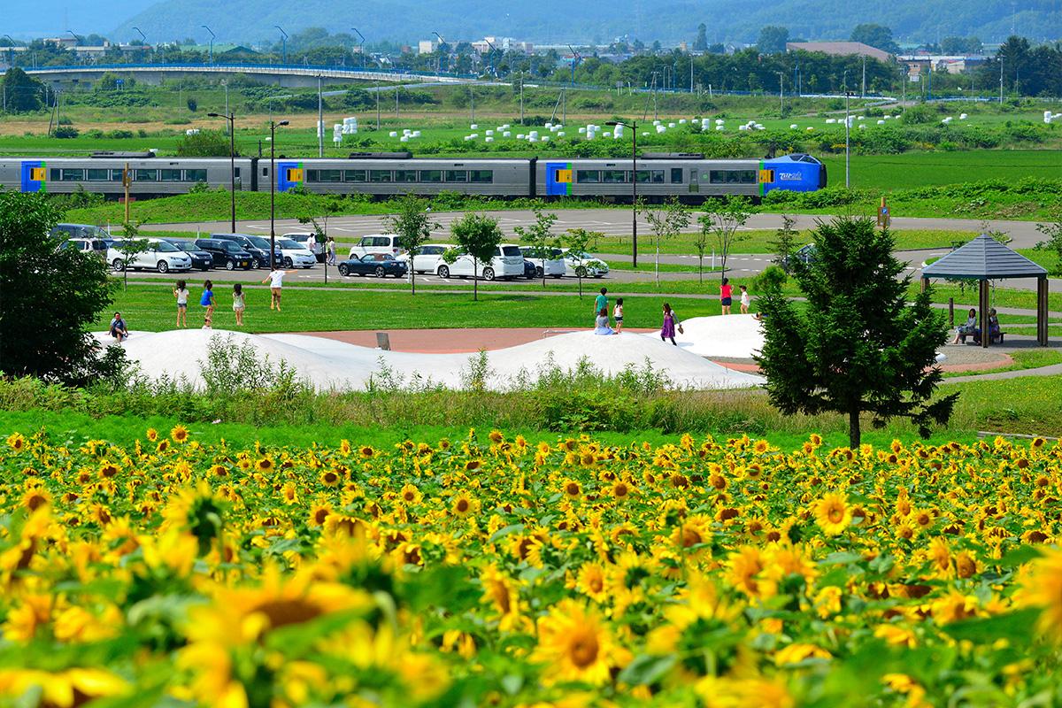 【北海道のおすすめ移住先】大自然とほどよい都会を満喫できる街「名寄市」