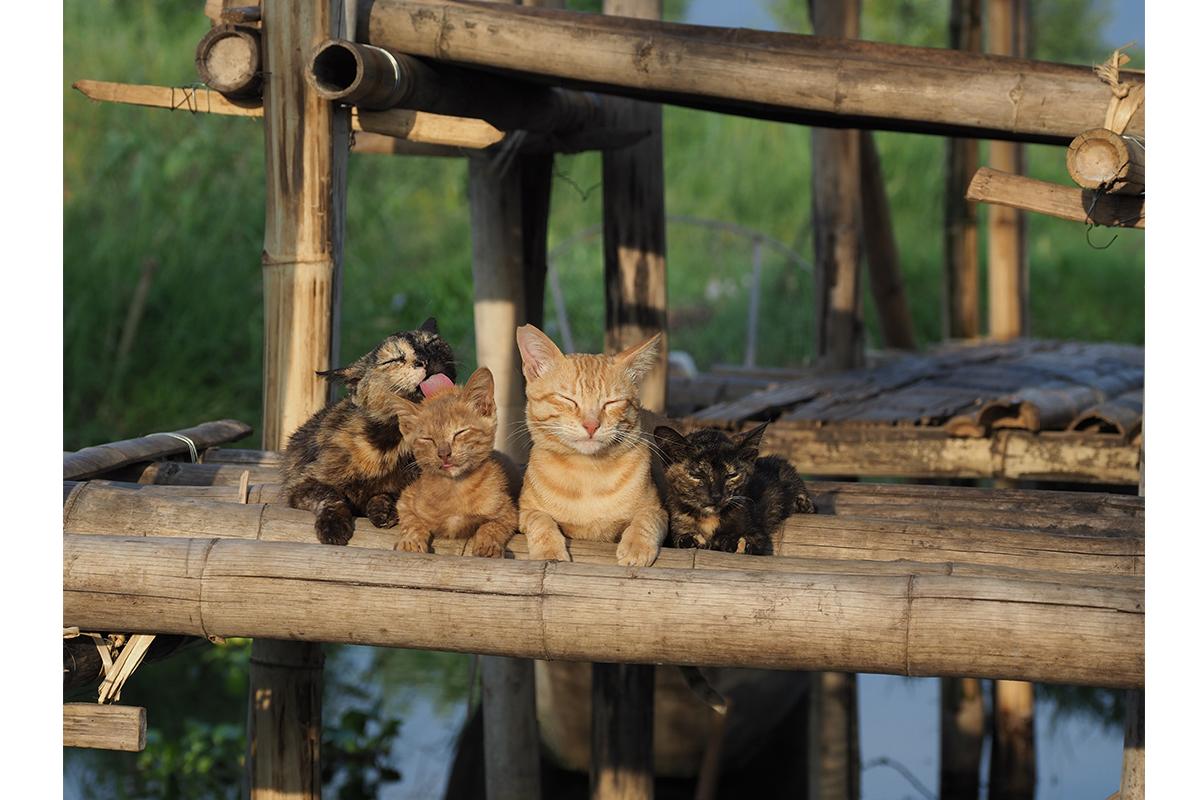 猫の日イベントの岩合展