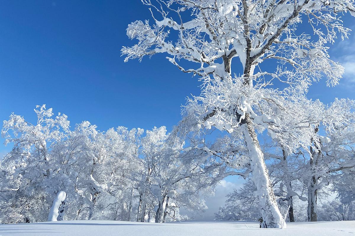 名寄市のスキー場の雪景色