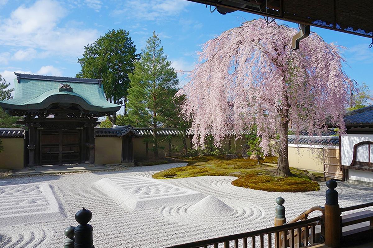 【京都】2021お花見スポット!風情ある「しだれ桜」の名所5選