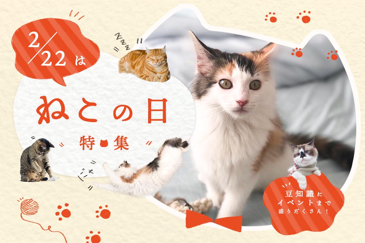 【特集】2月22日は猫の日!猫好き必見のイベントや可愛いスイーツを紹介