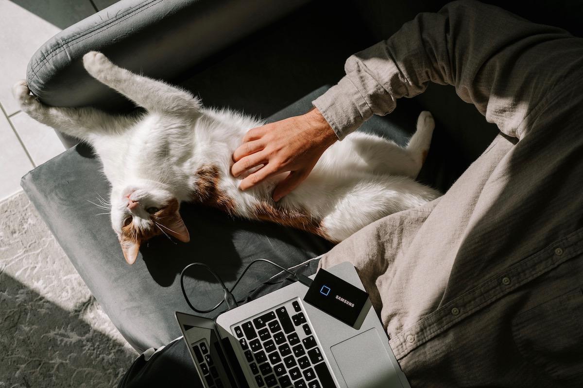 気持ち良さそうな猫