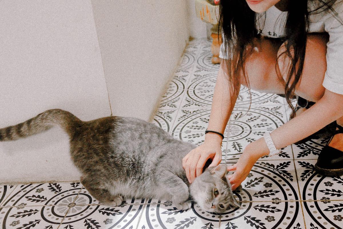 首を触られる猫