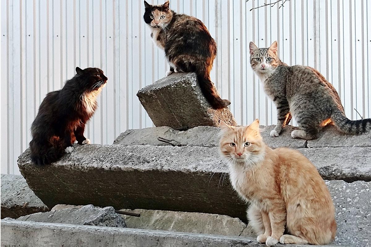 【猫の集会とは?】集会を開く理由や人が参加するにはどうすればいい?