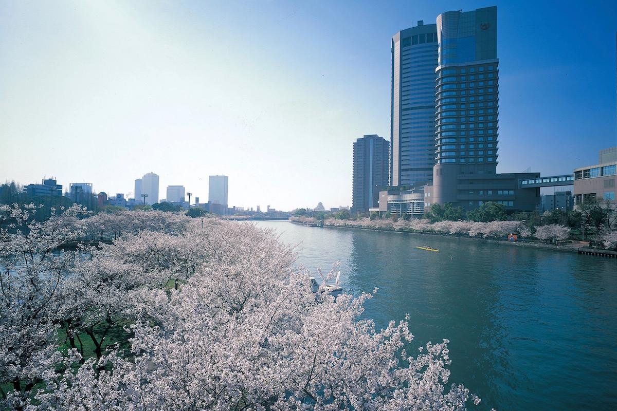 毛馬桜之宮公園の桜