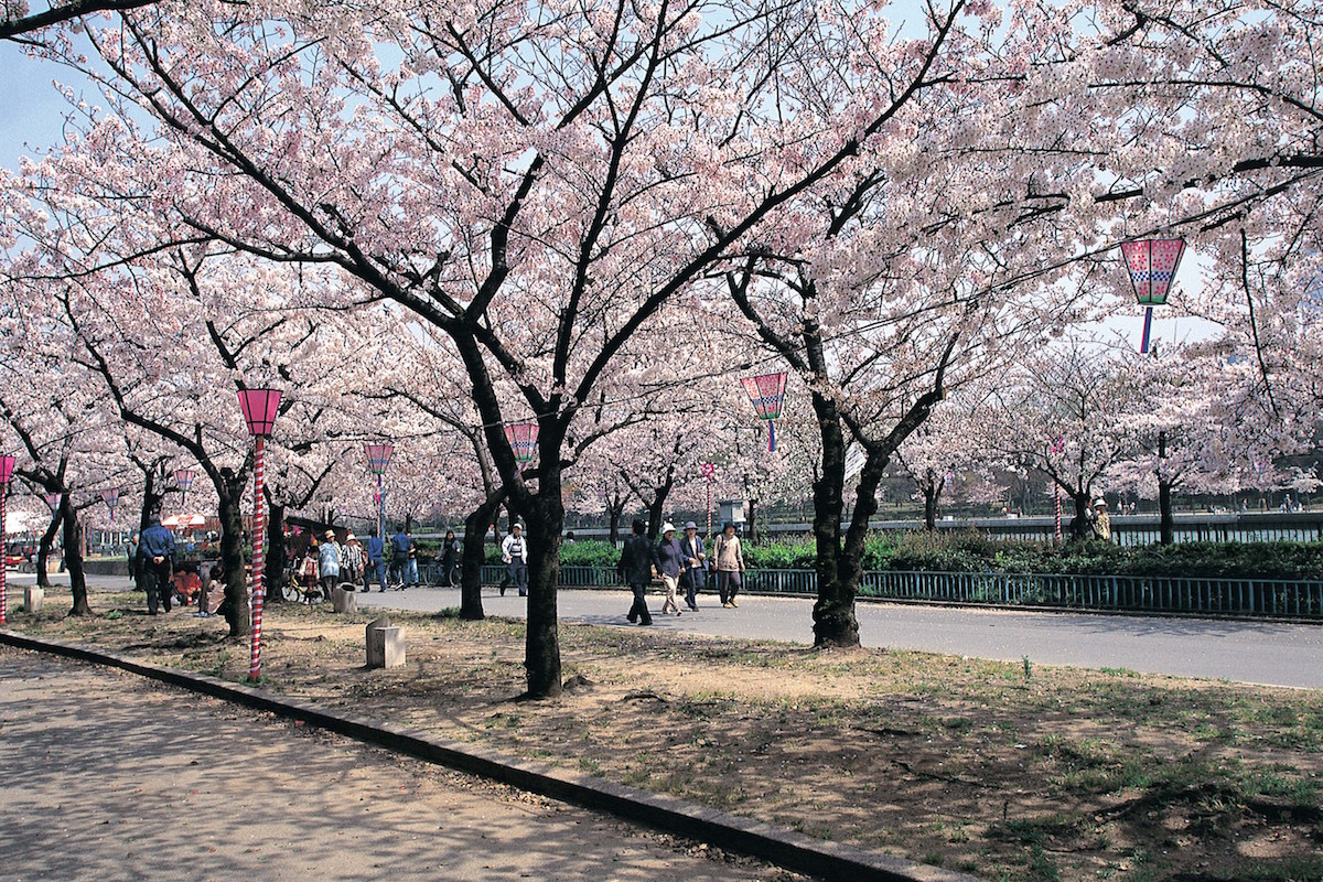毛馬桜之宮公園の園内
