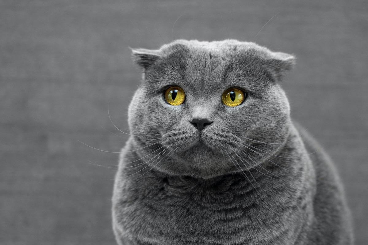 目をそらす猫