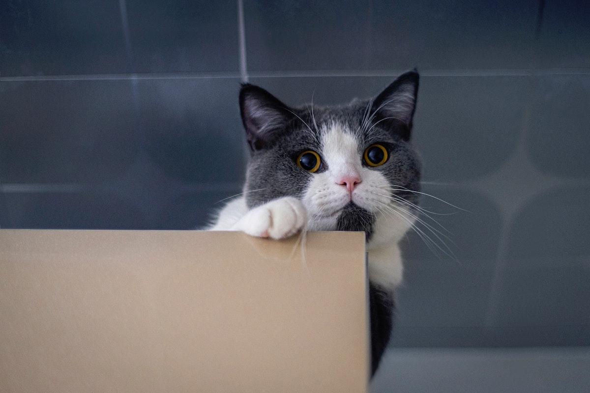 箱を噛む猫