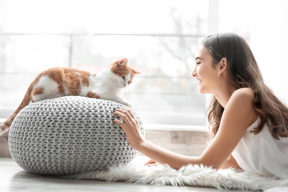 どんな猫を選ぶ?あなたにぴったりの猫の選び方【飼う前の準備】