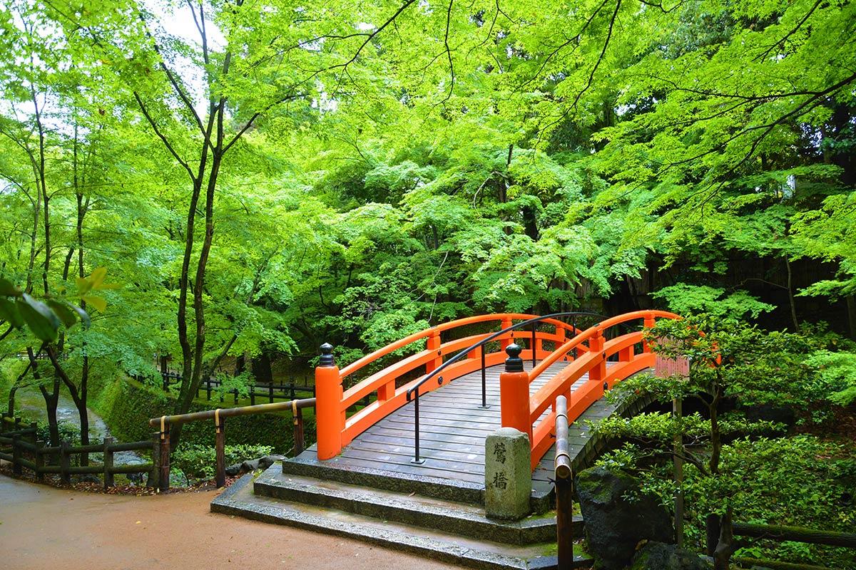 【京都】新緑が映える「青もみじ」の名所5選!初夏の風物詩を見に行こう